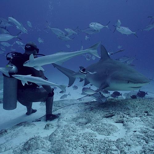 Bull Shark Encounter and Feeding - Scuba Playa